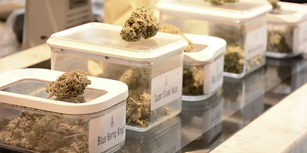 A selection of cannabis strains on the counter of an Amsterdam Coffeeshop for the Coffeeshop Guru shop guide